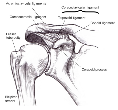 Acromioclavicular Ac Joint Injuries Phoenix Shoulder And Knee
