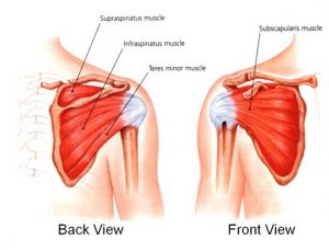 Rotator Cuff Front Back