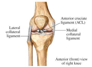 medial collateral ligament (mcl) injuries | phoenix shoulder and knee, Human Body