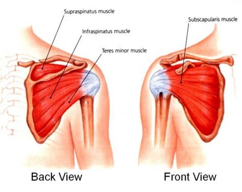 calcific tendonitis, shoulder surgeon in phoenix az | phoenix, Human body